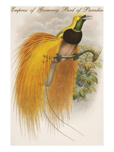 Empress of Germany Bird of Paradise.-John Gould-Art Print