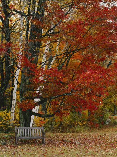 Empty Bench under Maple Tree, Twin Ponds Farm, West River Valley, Vermont, USA-Scott T^ Smith-Photographic Print