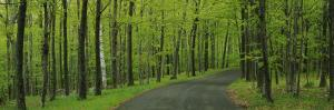 Empty Road Passing through a Forest, Peninsula State Park, Door County, Wisconsin, USA