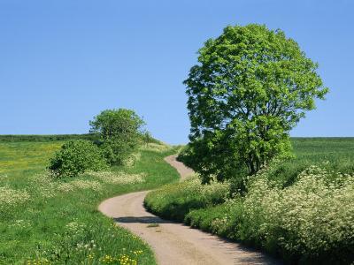 Empty Road Winding Through Countryside, Devon, England, United Kingdom, Europe-Michael Black-Photographic Print