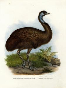 Emu, 1864