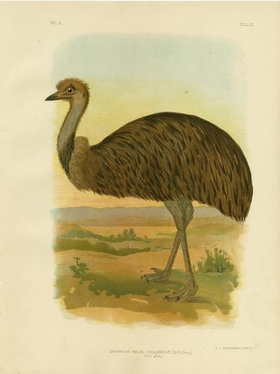 Emu, 1891-Gracius Broinowski-Giclee Print