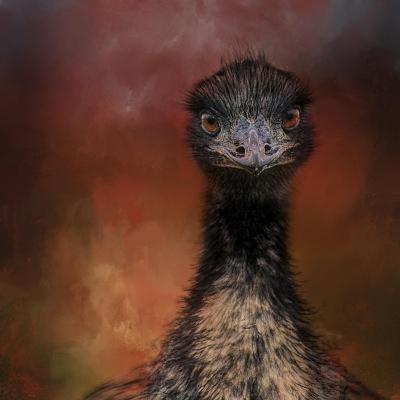 Emu Stare-Jai Johnson-Giclee Print