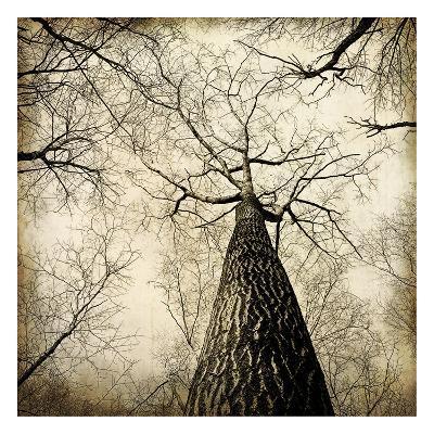 Enchanted Forest 2-Kimberly Allen-Art Print