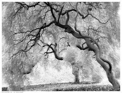 Enchanted Forest--Art Print