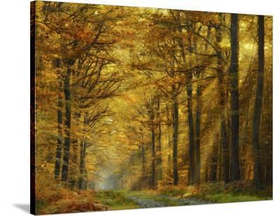 Enchanted Forest-Marianna Safronova-Stretched Canvas Print
