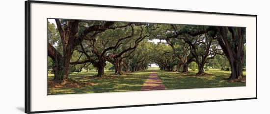 Enchanted Oaks-Mike Jones-Framed Art Print