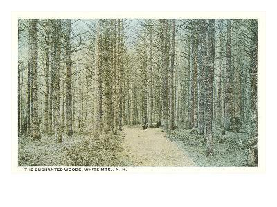 Enchanted Woods, White Mountains, New Hampshire--Art Print