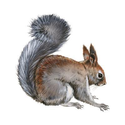 Abert's Squirrel (Sciurus Aberti), Mammals