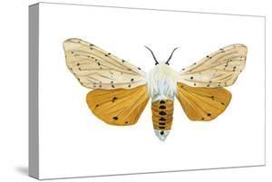 Acrea Moth (Estigmene Acraea), Insects by Encyclopaedia Britannica