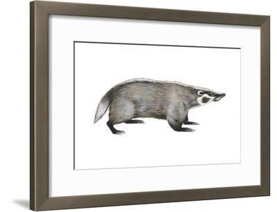 American Badger (Taxidea Taxus), Weasel, Mammals