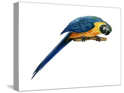 Blue-And-Yellow Macaw (Ara Araruna), Birds