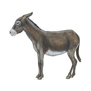 Donkey (Equus Asinus), Mammals by Encyclopaedia Britannica
