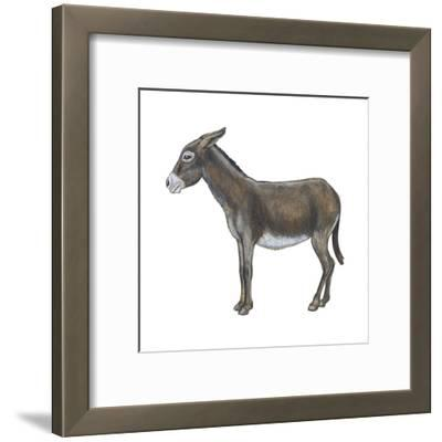 Donkey (Equus Asinus), Mammals