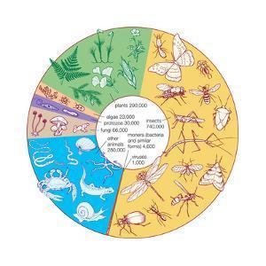 Estimated Number of known Living Species. Biosphere, Earth Sciences by Encyclopaedia Britannica