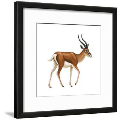 Gazelle (Gazella Granti), Mammals