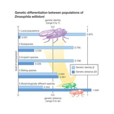 Genetic Differentiation Between Populations of Drosophila Willistoni. Evolution