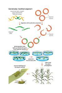Genetically Modified Organism. Recombinant Dna Technology, Genetic Engineering, Heredity, Genetics by Encyclopaedia Britannica