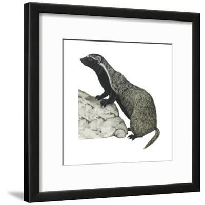 Grison (Galictis), Mammals