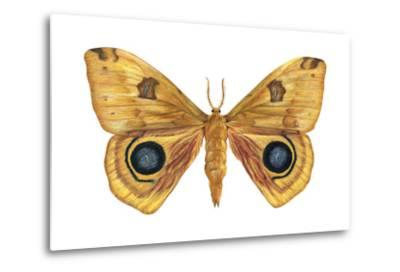 Io Moth (Automeris Io), Insects