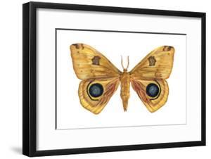 Io Moth (Automeris Io), Insects by Encyclopaedia Britannica