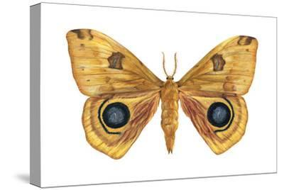Io Moth (Automeris Io), Insects