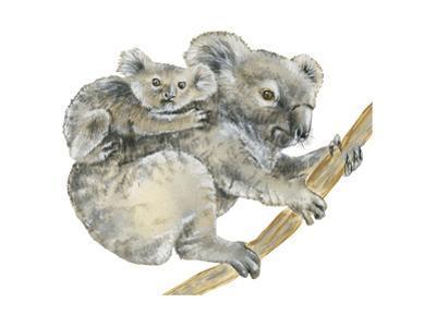 Koala (Phascolarctos Cinereus), Marsupial, Mammals