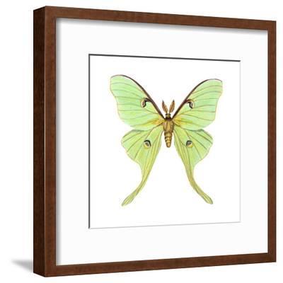 Luna Moth (Actias Luna), Insects
