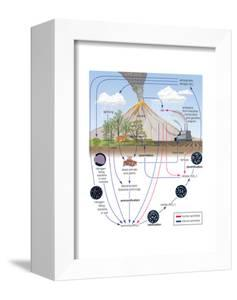 Nitrogen Cycle, Biosphere, Atmosphere, Earth Sciences by Encyclopaedia Britannica