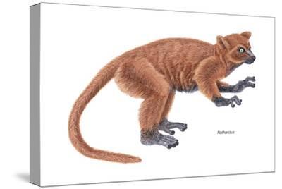 Notharctus, Extinct Lemur, Mammals