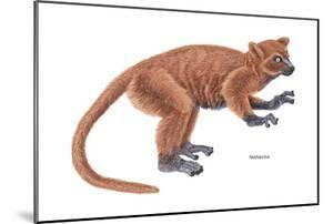 Notharctus, Extinct Lemur, Mammals by Encyclopaedia Britannica