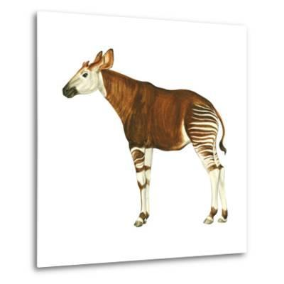 Okapi (Okapi Johnstoni), Mammals