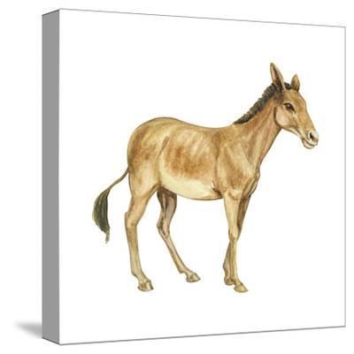 Onager (Equus Onager), Mammals