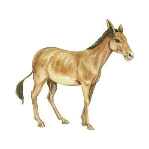 Onager (Equus Onager), Mammals by Encyclopaedia Britannica