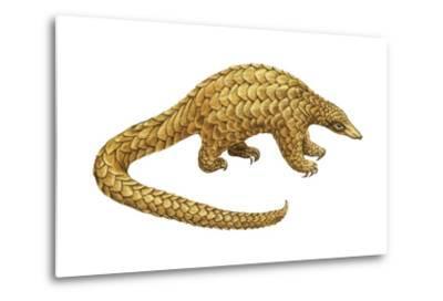 Pangolin (Manis Gigantea), Mammals