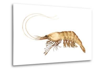 Pink-Grooved Shrimp (Peneus Duorarum), Crustaceans