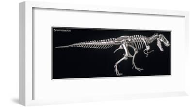 Tyrannosaurus Skeleton, Dinosaurs
