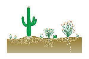 Vegetation Profile of a Desert. Biosphere, Earth Sciences by Encyclopaedia Britannica