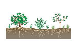 Vegetation Profile of a Scrubland. Biosphere, Earth Sciences by Encyclopaedia Britannica