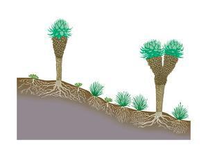 Vegetation Profile of Tropical Mountain Lands. Biosphere, Earth Sciences by Encyclopaedia Britannica