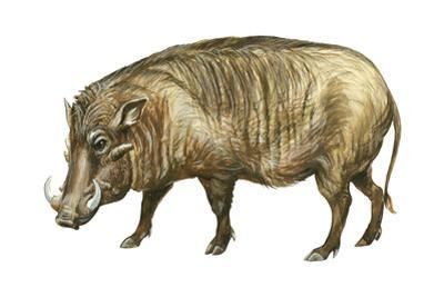 Warthog (Phacochoerus Aethiopicus), Mammals