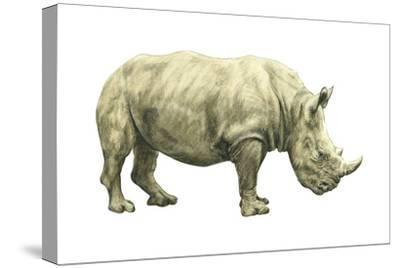 White Rhinoceros (Ceratotherium Simus), Mammals