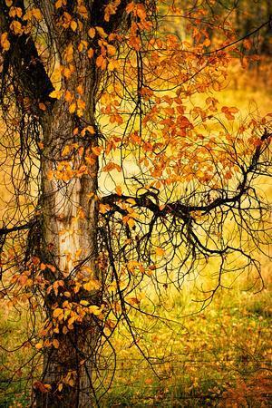 https://imgc.artprintimages.com/img/print/end-of-autumn_u-l-pu35qb0.jpg?p=0