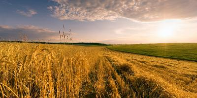 End of Day over Field with Straw-Taras Lesiv-Photographic Print