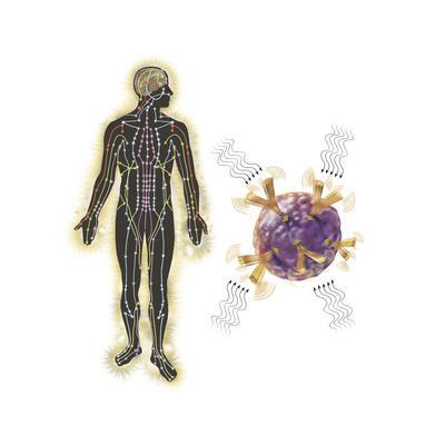 https://imgc.artprintimages.com/img/print/energy-meridians-of-the-human-body_u-l-pr6guk0.jpg?p=0