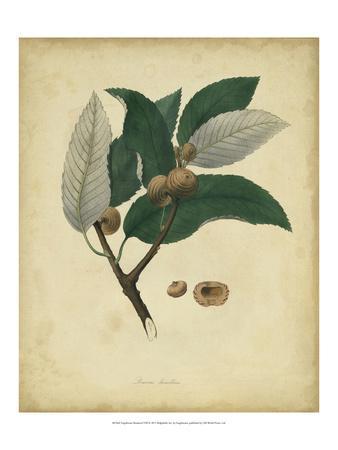 https://imgc.artprintimages.com/img/print/engelmann-botanical-viii_u-l-pfsdjl0.jpg?p=0