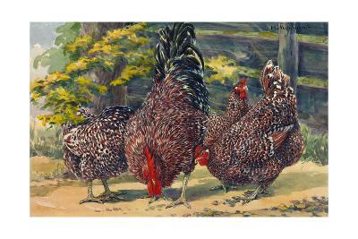 England's Speckled Sussex Pecks the Ground-Hashime Murayama-Giclee Print