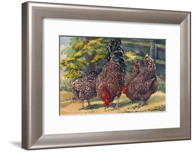 England's Speckled Sussex Pecks the Ground-Hashime Murayama-Framed Giclee Print