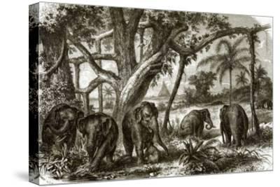 A Forest in Ceylon