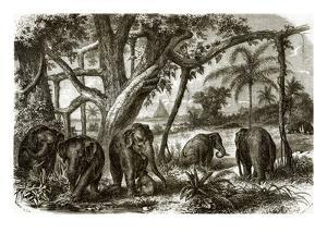 A Forest in Ceylon by English